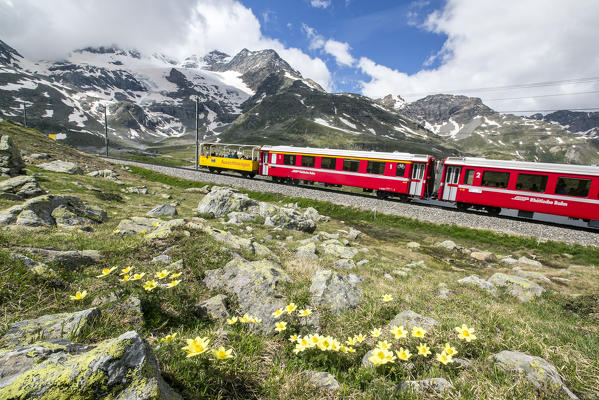 The red train, the icon of the Raethian Railway, travelling near Bernina Pass. Pontresina Engadine Canton of Graubunden Switzerland Europe