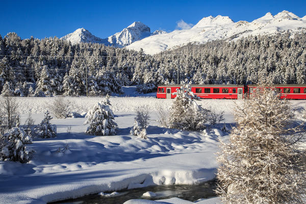 The Red Bernina train in winter in the snowy landscape of Engadina, Switzerland.