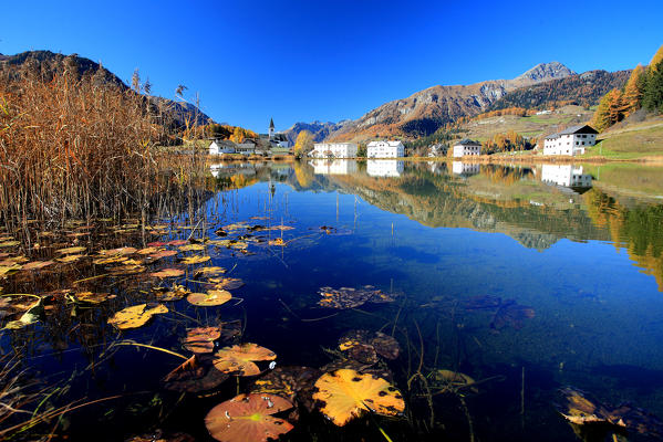 Lily pads yellowed by autumn floating in Lake Tarasp. Engadine, Canton of Graubunden, Switzerland Europe