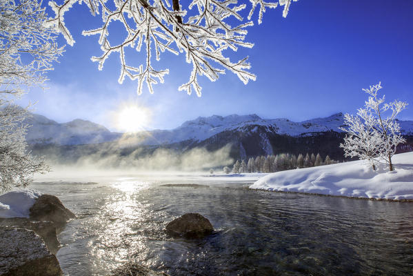 Sun illuminates tree branches covered with frost along the river Inn. Sils. Engadine. Switzerland. Europe