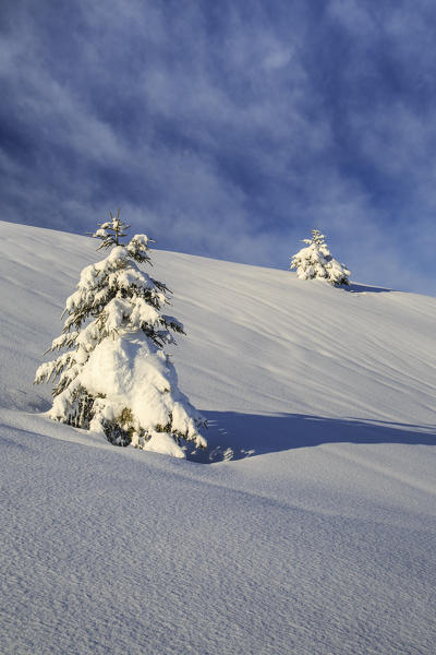 Snow covered trees after a heavy snowfall Olano Masino Valley Valtellina Orobie Alps Lombardy Italy Europe
