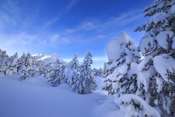 The heavy snowfall covered trees and the peaks  around Maloja Canton of Graubünden Engadine Switzerland Europe