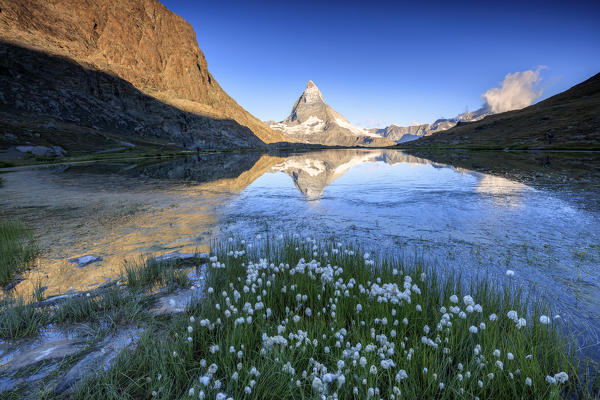 Cotton grass frame the Matterhorn reflected in Lake Stellisee at dawn Zermatt Canton of Valais Switzerland Europe