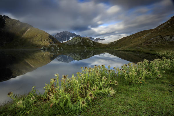 Green pastures and flowers frames The Fenetre Lakes Ferret Valley Saint Rhémy Grand St Bernard Aosta Valley Italy Europe