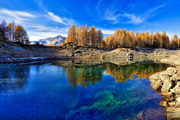 The yellowed larches are reflected in the turquoise waters of Blue Lake not far from Madesimo the main tourist resort in the valley. Spluga Valley. Valchiavenna. Lombardy. Italy. Europe