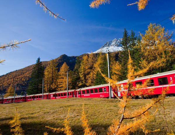 The Bernina Express in the autumn landscape of Val Poschiavo, Switzerland Europe
