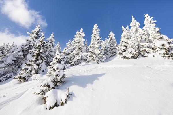 Blue sky frames the snowy woods on a sunny winter day Bettmeralp district of Raron canton of Valais Switzerland Europe
