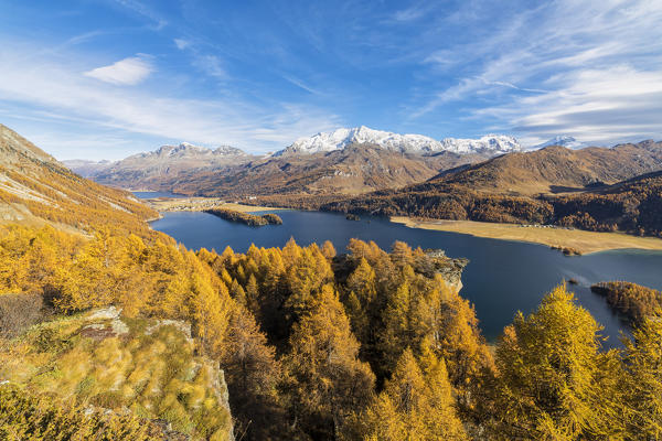 The yellow larches and woods frame Lake Sils in autumn Plaun da Lej Upper Engadine Canton of Graubunden Switzerland Europe