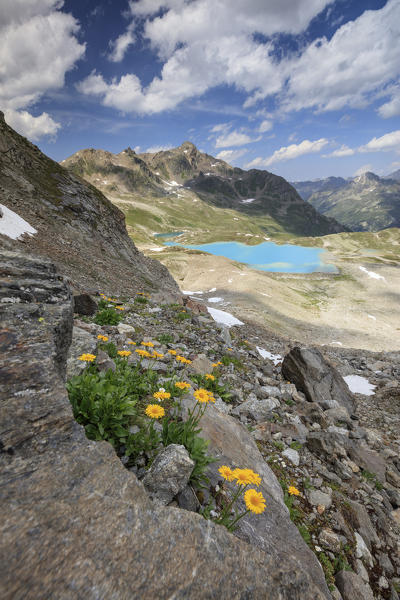 Turquoise lake framed by yellow flowers and rocky peaks Joriseen Jörifless Pass canton of Graubünden Engadin Switzerland Europe