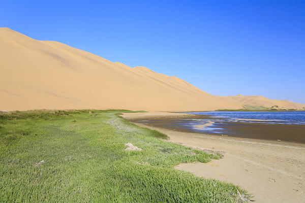 Carpet of grass in the lagoon framed by sand dunes modeled by wind Walvis Bay Namib Desert Erongo Region Namibia Southern Africa