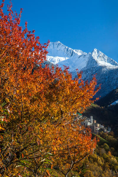 Autumnal colors in the Bitto valley contrasting with the bright white of the snow-capped peak of Mount Azzarini Albaredo, Orobie alps, Valtellina, Sondrio, Lombardy, Italy Europe