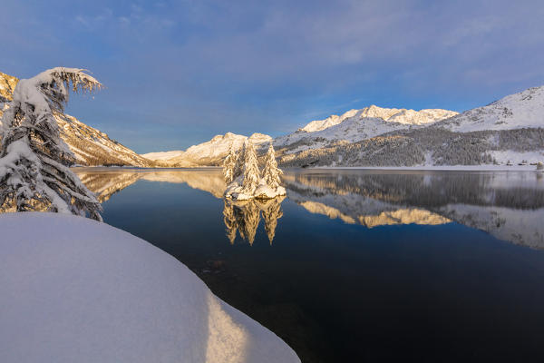 Isolated snow covered trees in Lake Sils, Plaun da Lej, Maloja Region, Canton of Graubunden, Engadin, Switzerland
