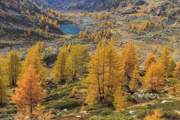 Hasil gambar untuk lombardy autumn