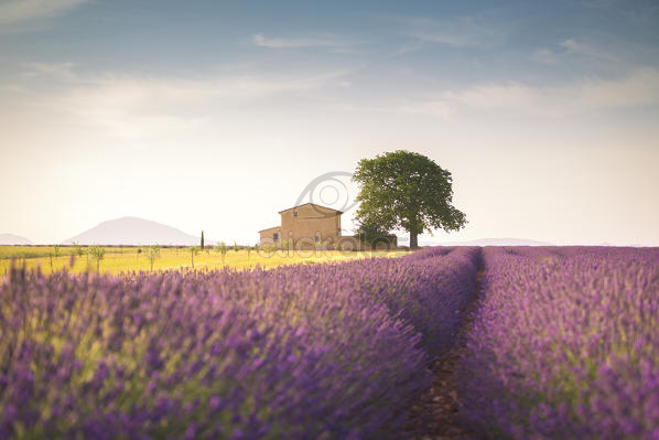 Lonely house surrounded by lavender fields near Valensole